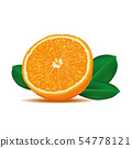 Realistic Ripe and Fresh Orange Cut Vector. 54778121