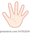 Hand palm illustration 54781834