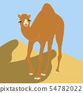 낙타 54782022