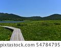 在Yukonumanuma的灰鼠和觀察樹道路 54784795