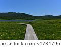 在Yukonumanuma的灰鼠和觀察樹道路 54784796