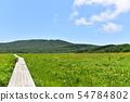 在Yukonumanuma的灰鼠和觀察樹道路 54784802
