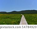 在Yukonumanuma的灰鼠和觀察樹道路 54784920