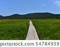 在Yukonumanuma的灰鼠和觀察樹道路 54784939