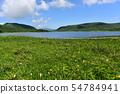 在Yukonumanuma的灰鼠和觀察樹道路 54784941
