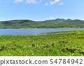 在Yukonumanuma的灰鼠和觀察樹道路 54784942