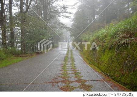 林道在大雪山國家森林遊樂區,台灣  54785608