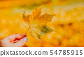 autumn leaves on grass 54785915