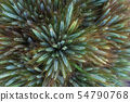 Spikes reach for the sun on a summer day 54790768