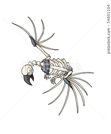 Bird skeleton. Isolated vector object on white background 54801104