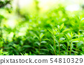 雜草叢生的植物和陽光 54810329