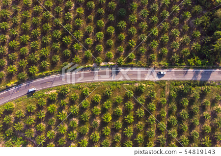 Aerial view of road in center of palm forest 54819143