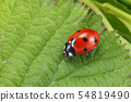 Ladybug on the green leaf 54819490