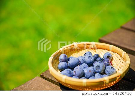 가정 과수 블루 베리 수확 54820410