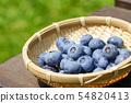 가정 과수 블루 베리 수확 54820413