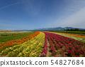 홋카이도의 꽃밭 54827684