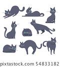 검은 고양이 고양이 포즈 표정 다양한 54833182