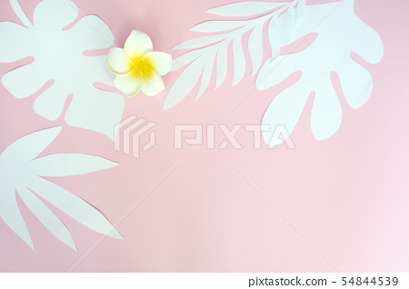 Tropical leaves and white flower on pink background paper. Place for your text. Concept for exotic 54844539