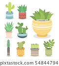 Cactus green plant cactaceous home nature cacti illustration of tree with flower 54844794