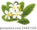 ดอกไม้,ธรรมชาติ,พื้นหลังสีขาว 54847195