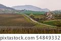 Hilly Landscape of Vineyards 54849332