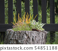 Decorative colorful flowers grow in flowerpot made from the old tree stump. wooden fence in 54851188