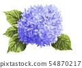 ดอกไม้,ธรรมชาติ,พื้นหลังสีขาว 54870217