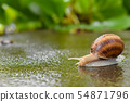 Snail on wet concrete, in the background green vegetation. 54871796