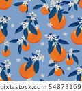 橙色 橘子 橙子 54873169