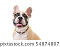 Head of cute french bulldog isolated 54874807