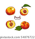 Peach fruit drawing, ripe peach fruit cut in half with bone. Watercolor peaches on a white 54876722