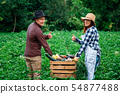 agriculture, female, vegetable 54877488