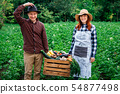 agriculture, crate, gardening 54877498