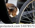 도시의 주차장에서 휴식을 취하고있는 비뚤어진 성격의 도둑 고양이 54878573
