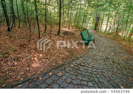 bench near the stone path in forest 54883546