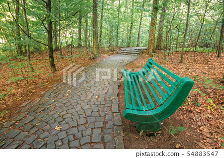 bench near the stone path in forest 54883547