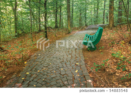 bench near the stone path in forest 54883548