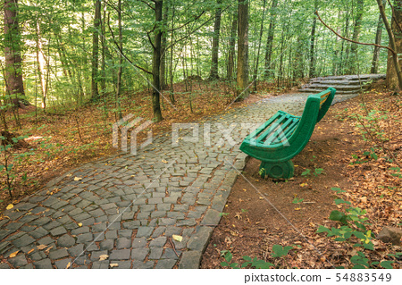 bench near the stone path in forest 54883549