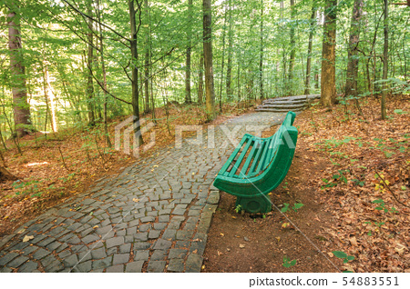 bench near the stone path in forest 54883551