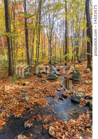 small brook among rock in forest 54883675