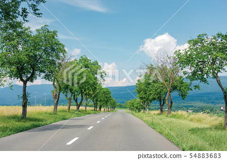 asphalt road through fields in to the mountains 54883683