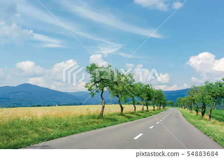 asphalt road through fields in to the mountains 54883684