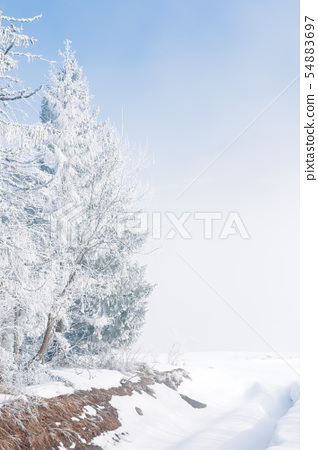 trees in hoarfrost on the edge of the forest 54883697
