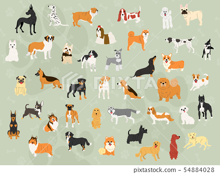 cute dogs in action wallpaper design 54884028