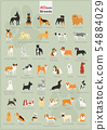 40 dogs in action illustration set 54884029