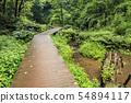 비의 계곡 (여름) 54894117