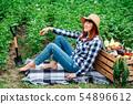 woman, harvest, female 54896612