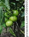Home garden 54899605