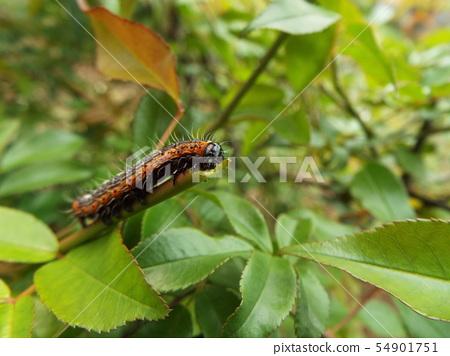 白翅蛾幼蟲 54901751