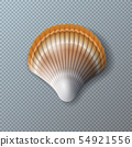 Vector Illustration with Beautiful Shell Isolated on Transparent Background. Vector Nature Sea 54921556